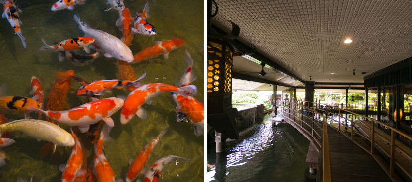 池で優雅に泳ぐ鯉を子供と一緒に橋の上から鑑賞