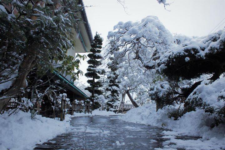 春の雪です。