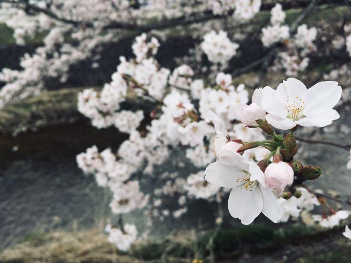 雪の多い4月でしたが、高山も気温が上がり春らしい日が続いております。