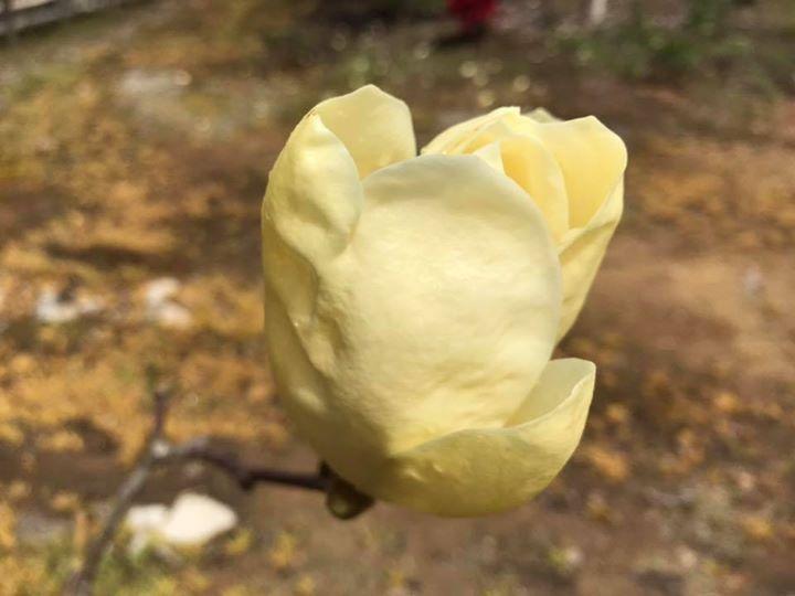 「花扇」では、四季折々、様々な花が咲きます。