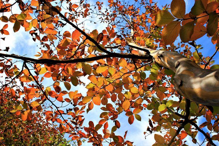 高山の木々も赤や黄色と色づき始め、見ごろを迎えた場所もございます。