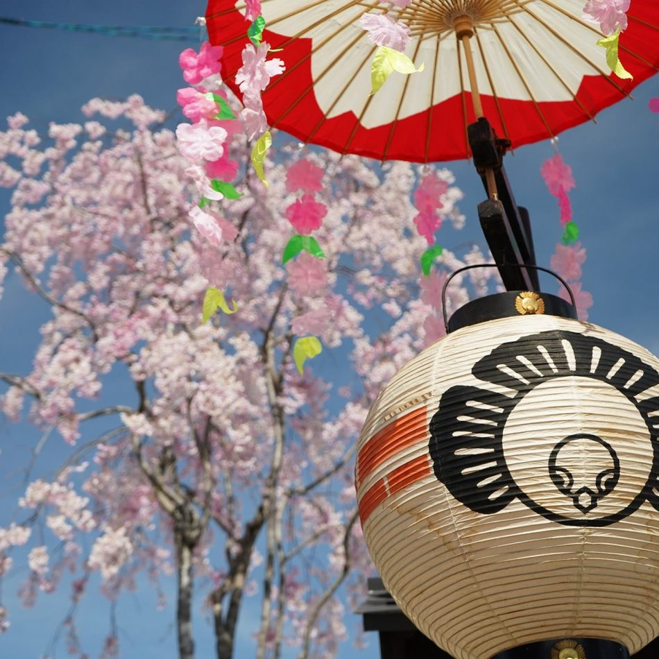 桜舞う青空の下、春の高山祭が静かに開催されました。